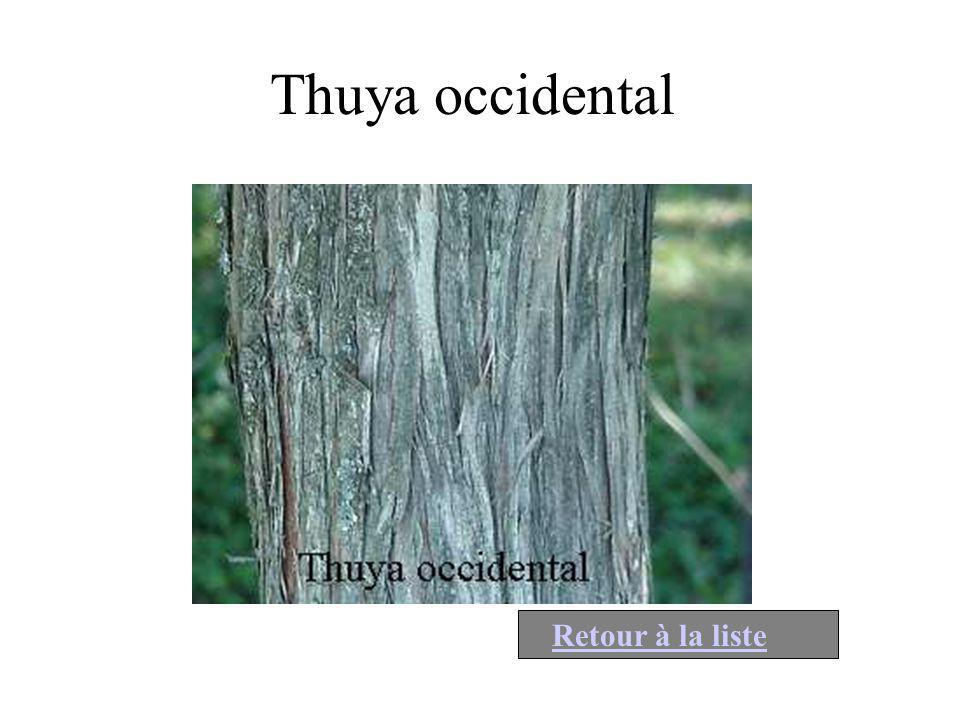 Thuya occidental Retour à la liste