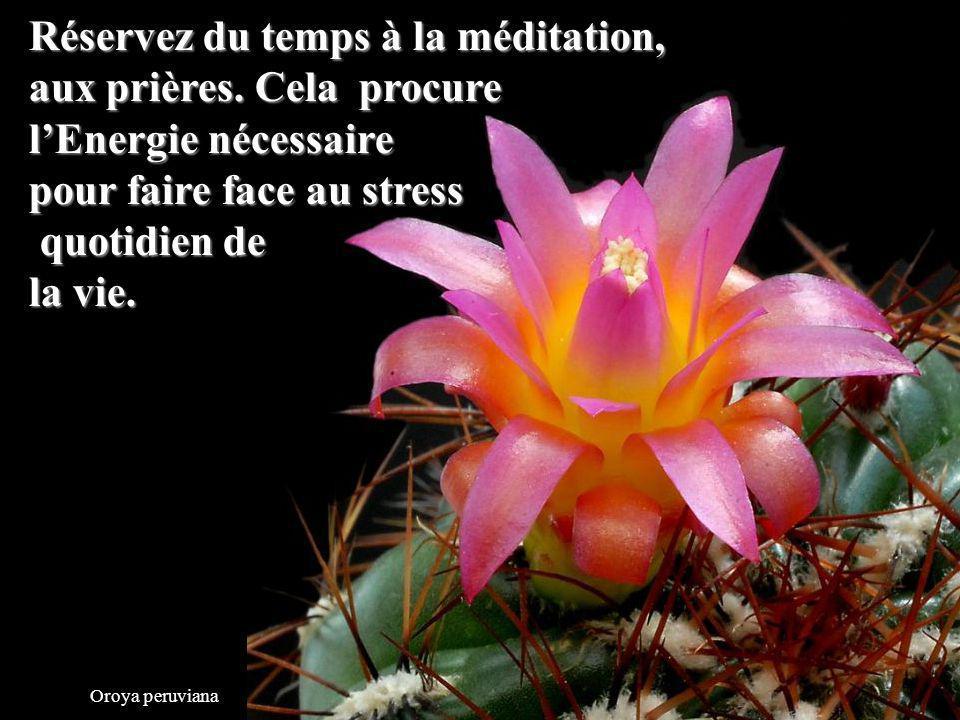 Réservez du temps à la méditation, aux prières. Cela procure