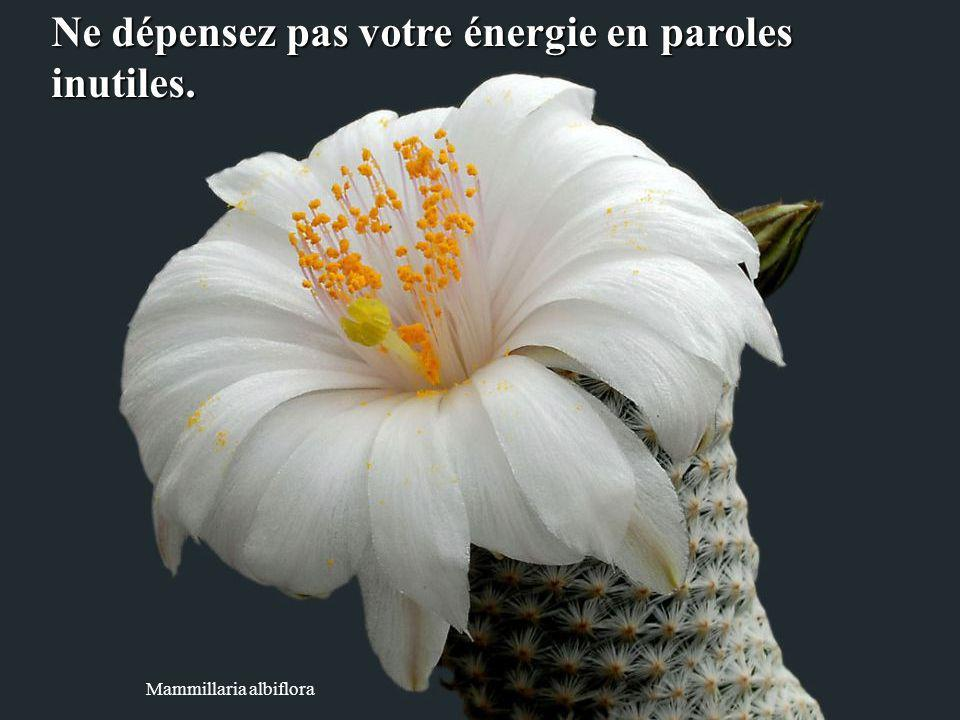 Ne dépensez pas votre énergie en paroles inutiles.