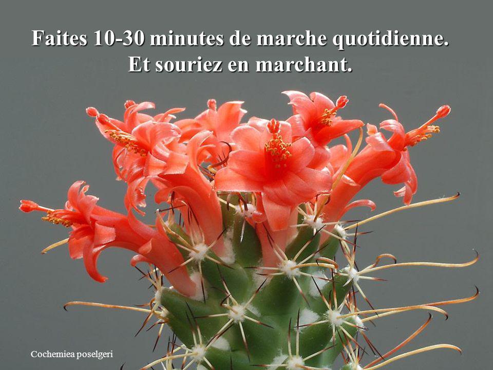 Faites 10-30 minutes de marche quotidienne.