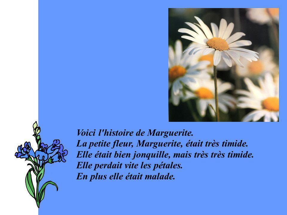 Voici l histoire de Marguerite