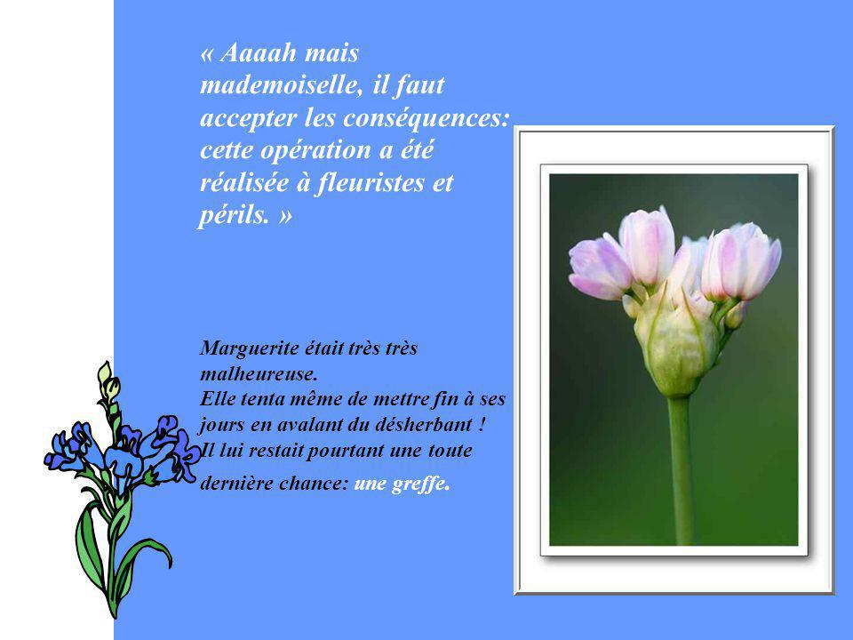 « Aaaah mais mademoiselle, il faut accepter les conséquences: cette opération a été réalisée à fleuristes et périls. »