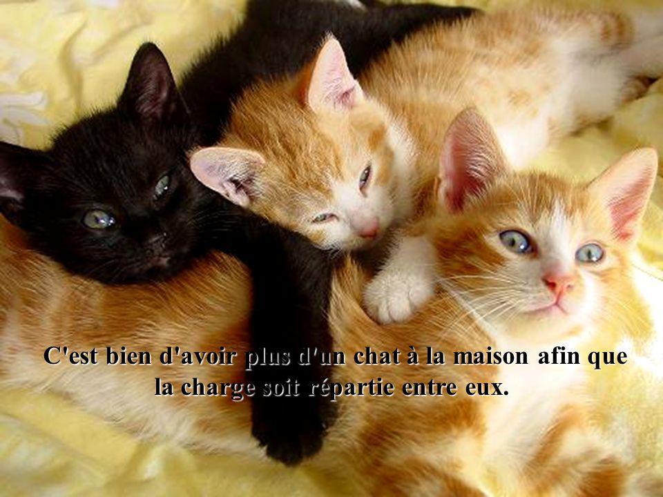 C est bien d avoir plus d un chat à la maison afin que la charge soit répartie entre eux.