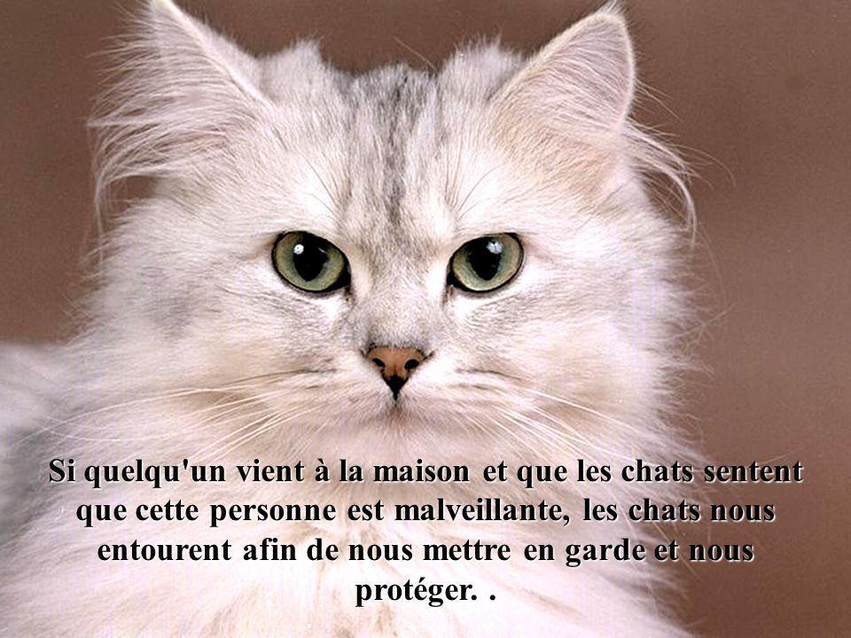 Si quelqu un vient à la maison et que les chats sentent que cette personne est malveillante, les chats nous entourent afin de nous mettre en garde et nous protéger.