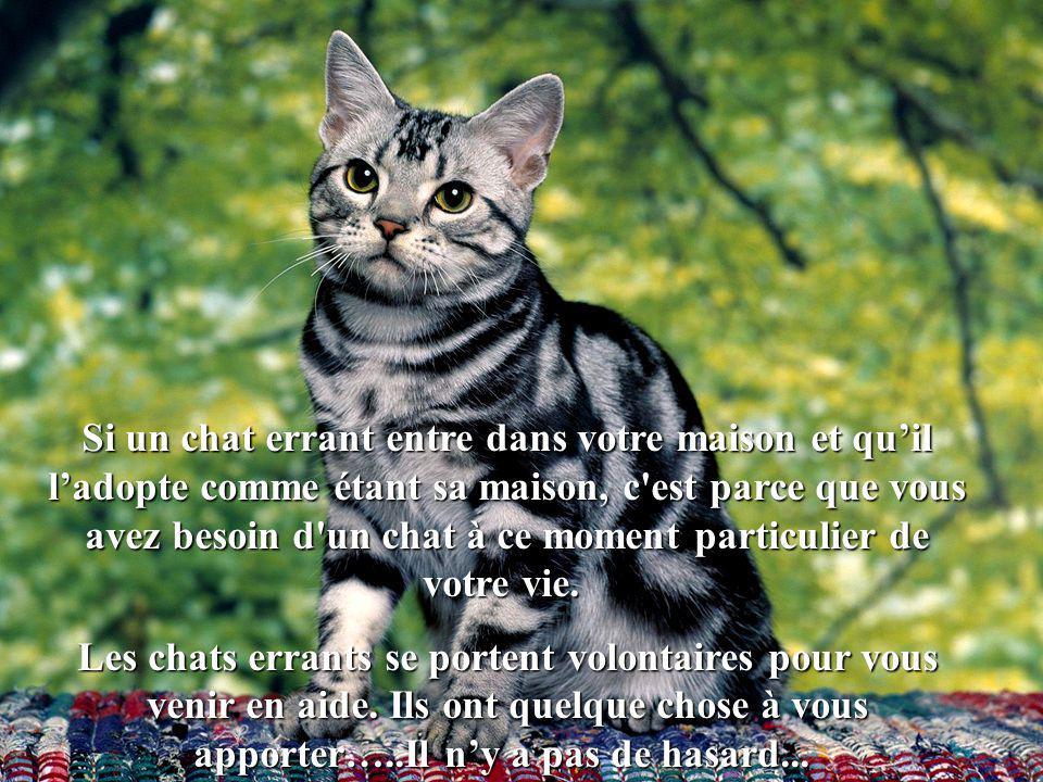 Si un chat errant entre dans votre maison et qu'il l'adopte comme étant sa maison, c est parce que vous avez besoin d un chat à ce moment particulier de votre vie.