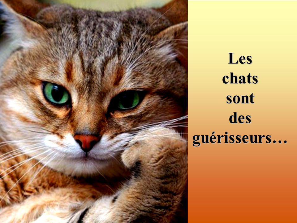 Les chats sont des guérisseurs…