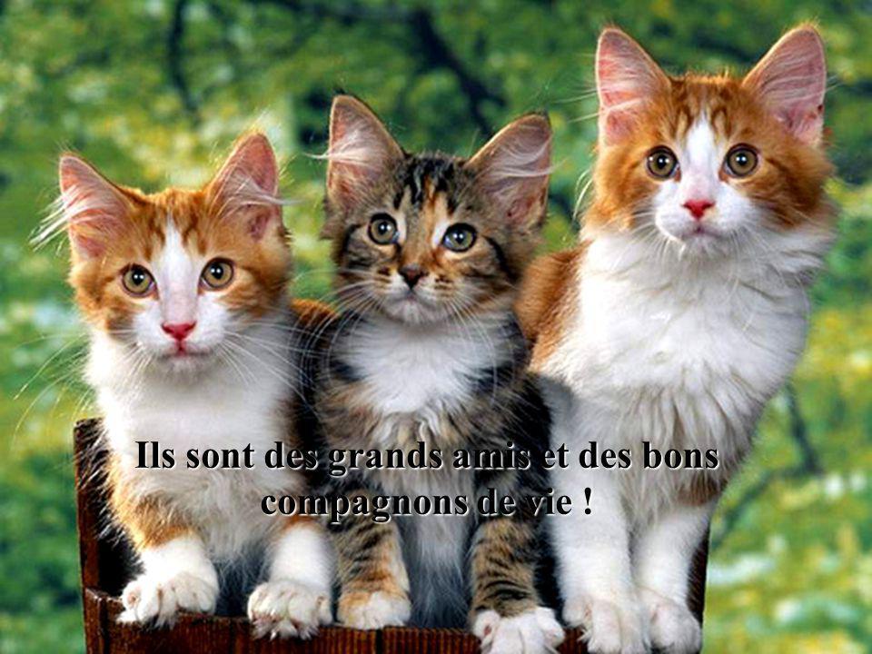 Ils sont des grands amis et des bons compagnons de vie !
