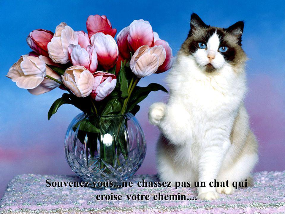 Souvenez-vous...ne chassez pas un chat qui croise votre chemin....