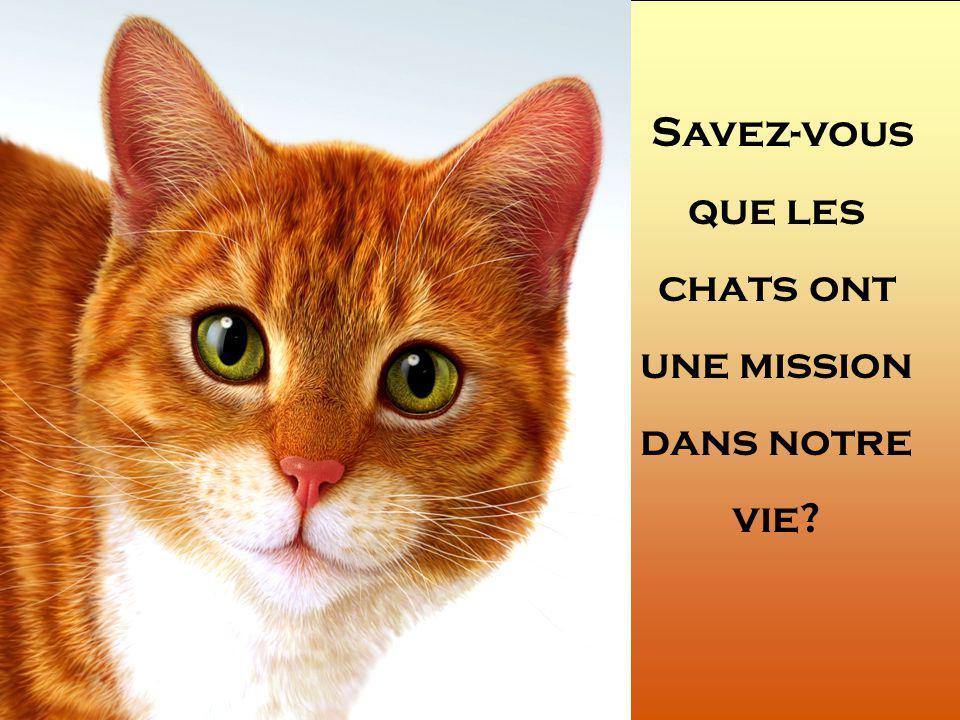 Savez-vous que les chats ont une mission dans notre vie
