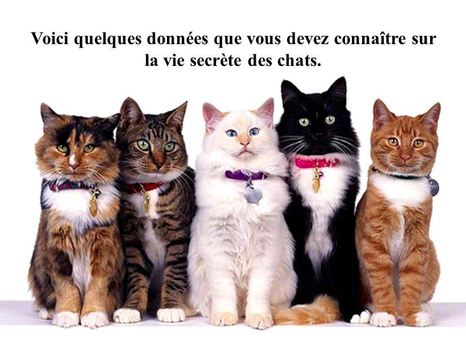 Voici quelques données que vous devez connaître sur la vie secrète des chats.