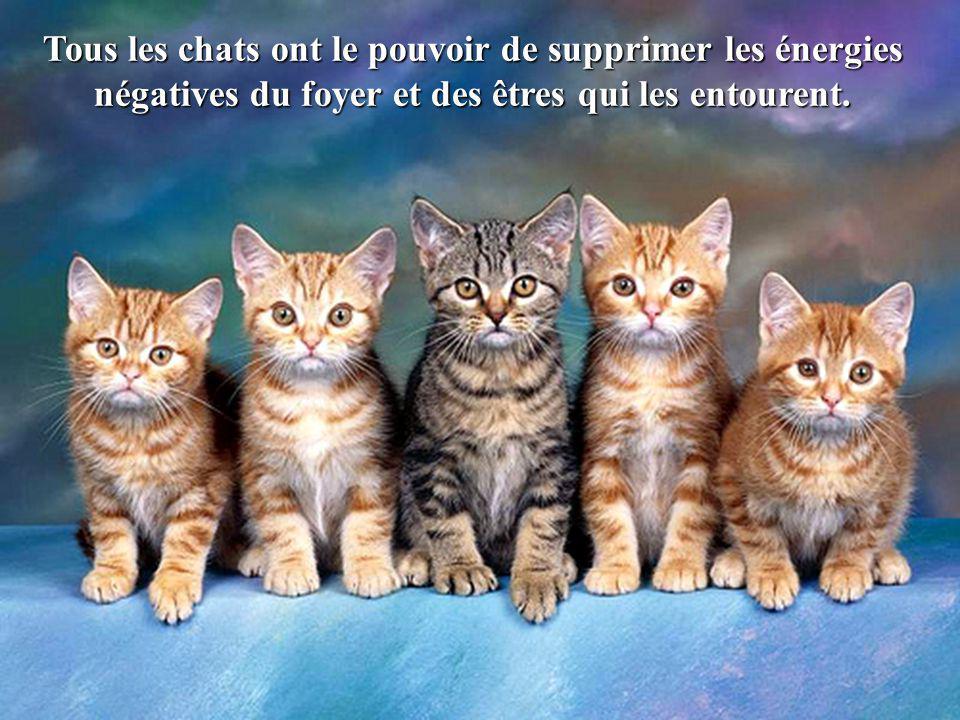Tous les chats ont le pouvoir de supprimer les énergies négatives du foyer et des êtres qui les entourent.