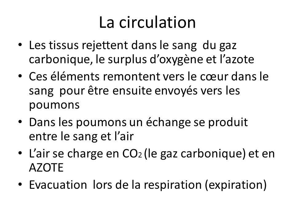 La circulation Les tissus rejettent dans le sang du gaz carbonique, le surplus d'oxygène et l'azote.