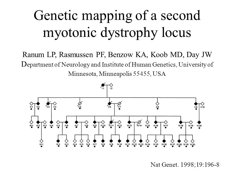 Genetic mapping of a second myotonic dystrophy locus Ranum LP, Rasmussen PF, Benzow KA, Koob MD, Day JW Department of Neurology and Institute of Human Genetics, University of Minnesota, Minneapolis 55455, USA