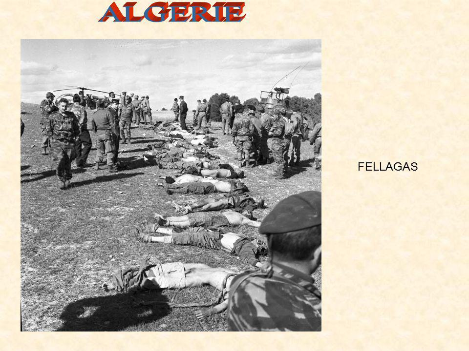 ALGERIE FELLAGAS