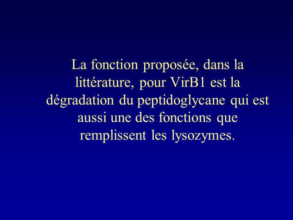 La fonction proposée, dans la littérature, pour VirB1 est la dégradation du peptidoglycane qui est aussi une des fonctions que remplissent les lysozymes.