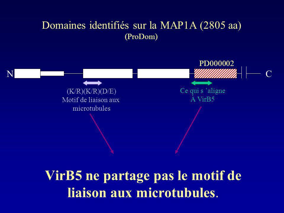 VirB5 ne partage pas le motif de liaison aux microtubules.