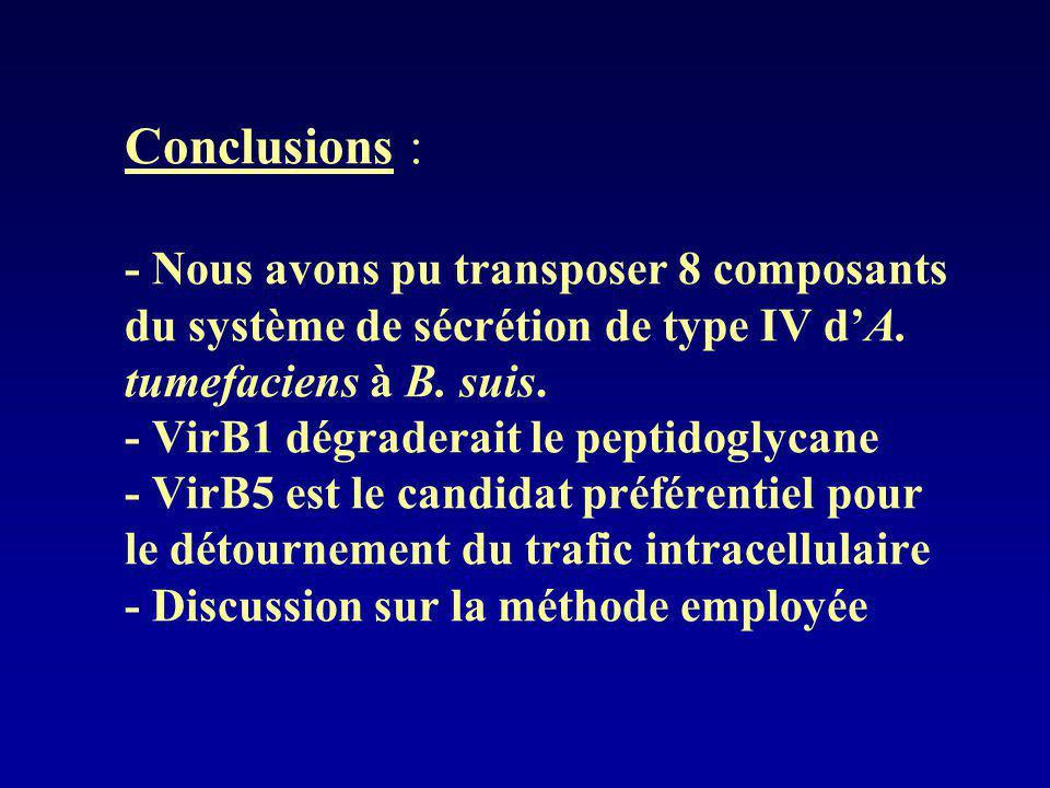 Conclusions : - Nous avons pu transposer 8 composants du système de sécrétion de type IV d'A.