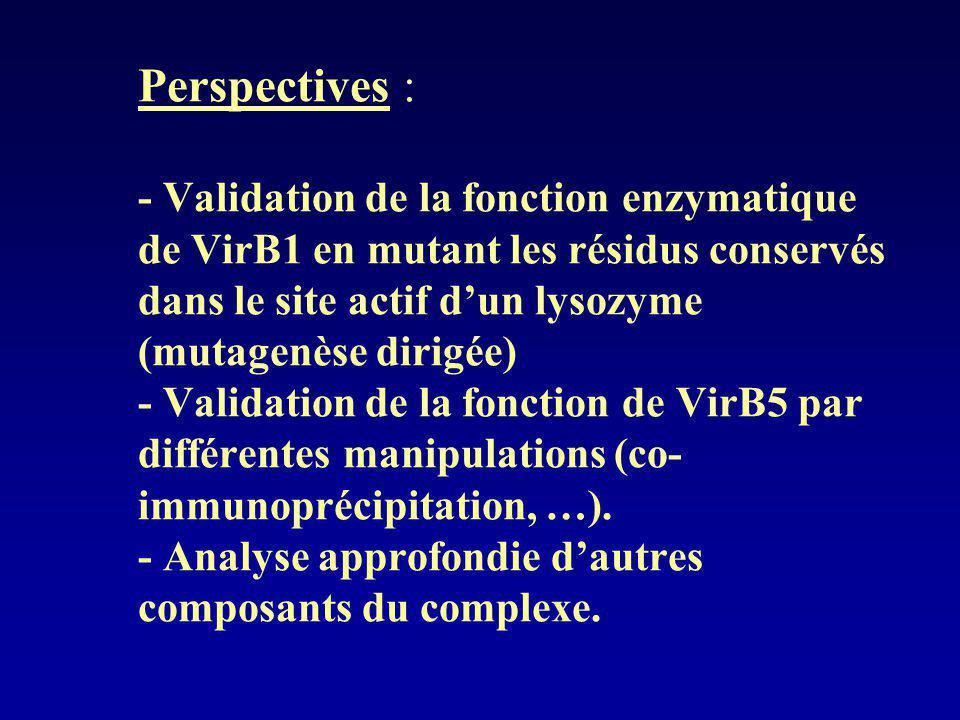 Perspectives : - Validation de la fonction enzymatique de VirB1 en mutant les résidus conservés dans le site actif d'un lysozyme (mutagenèse dirigée) - Validation de la fonction de VirB5 par différentes manipulations (co-immunoprécipitation, …).