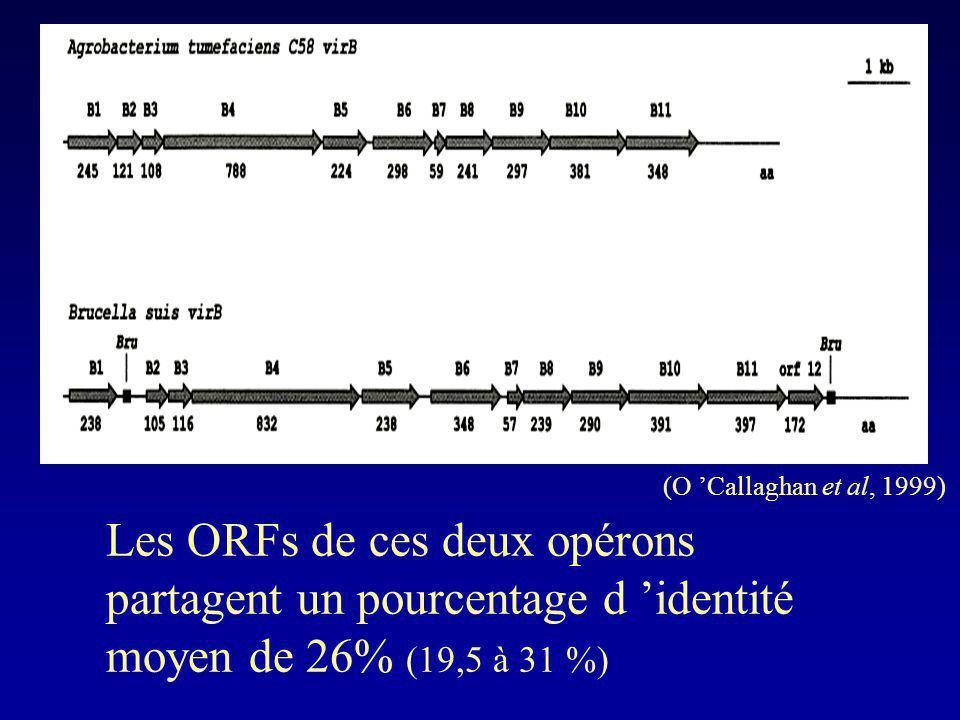 (O 'Callaghan et al, 1999) Les ORFs de ces deux opérons partagent un pourcentage d 'identité moyen de 26% (19,5 à 31 %)