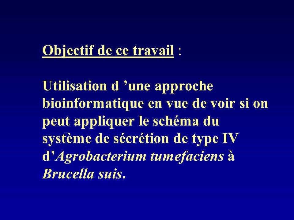 Objectif de ce travail : Utilisation d 'une approche bioinformatique en vue de voir si on peut appliquer le schéma du système de sécrétion de type IV d'Agrobacterium tumefaciens à Brucella suis.