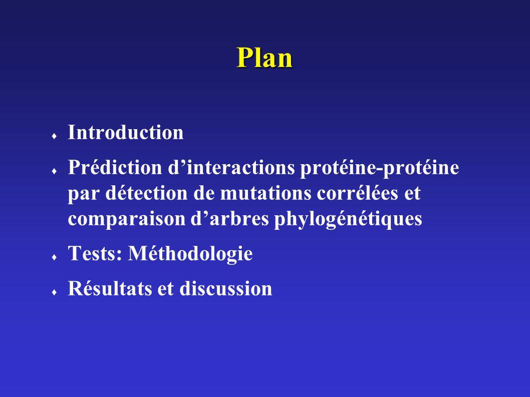 Plan Introduction. Prédiction d'interactions protéine-protéine par détection de mutations corrélées et comparaison d'arbres phylogénétiques.