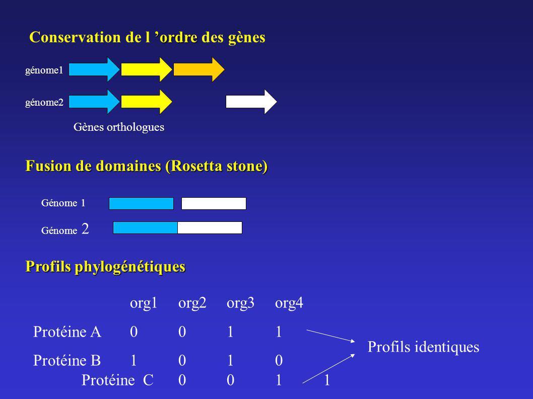 Conservation de l 'ordre des gènes