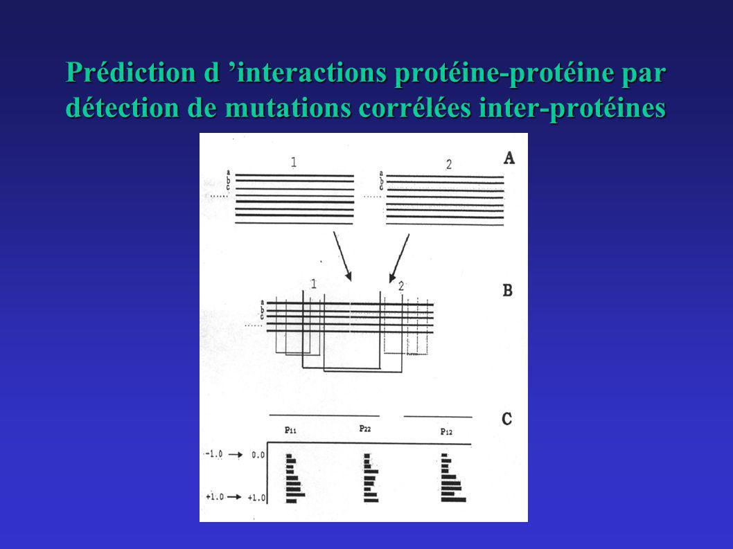 Prédiction d 'interactions protéine-protéine par détection de mutations corrélées inter-protéines