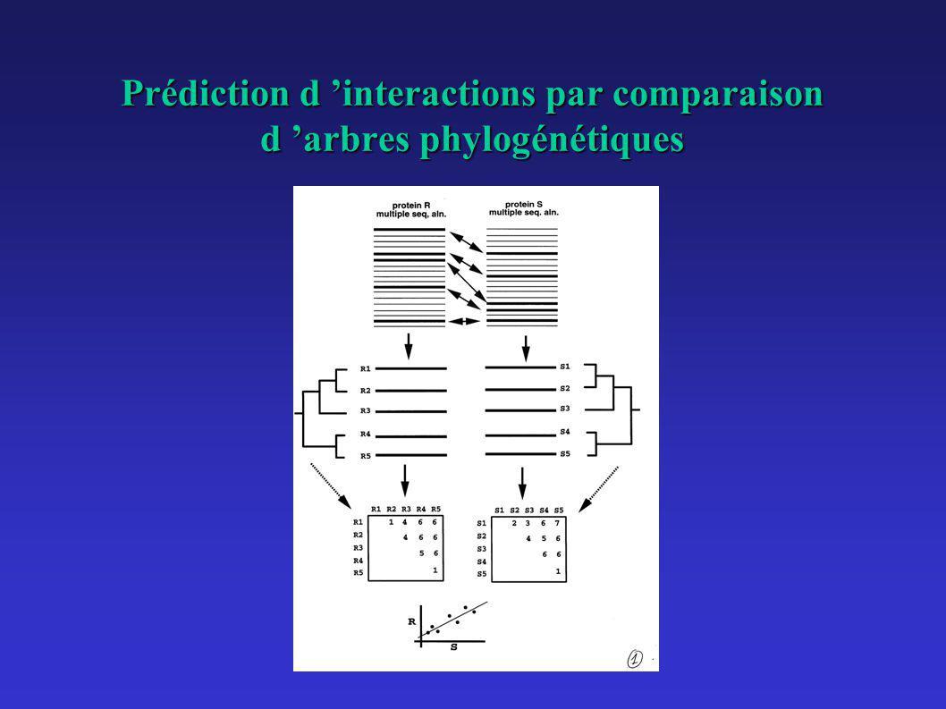 Prédiction d 'interactions par comparaison d 'arbres phylogénétiques