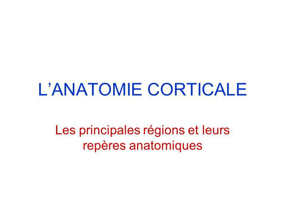Les principales régions et leurs repères anatomiques