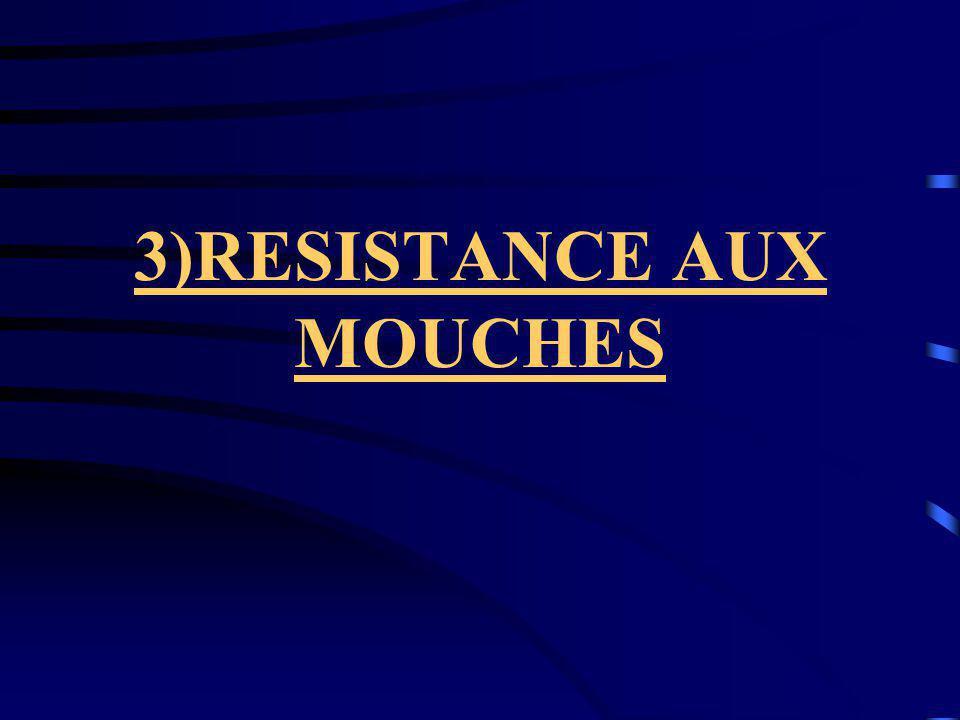 3)RESISTANCE AUX MOUCHES