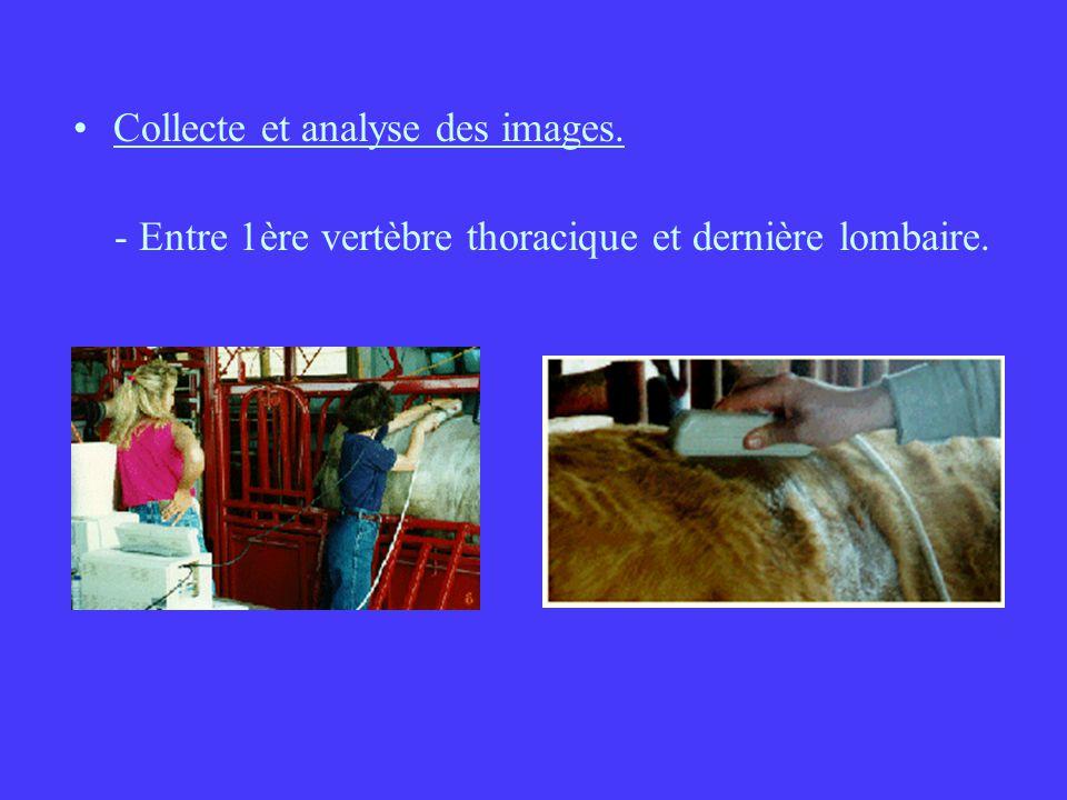 Collecte et analyse des images.