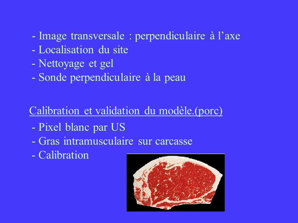 - Image transversale : perpendiculaire à l'axe - Localisation du site - Nettoyage et gel - Sonde perpendiculaire à la peau