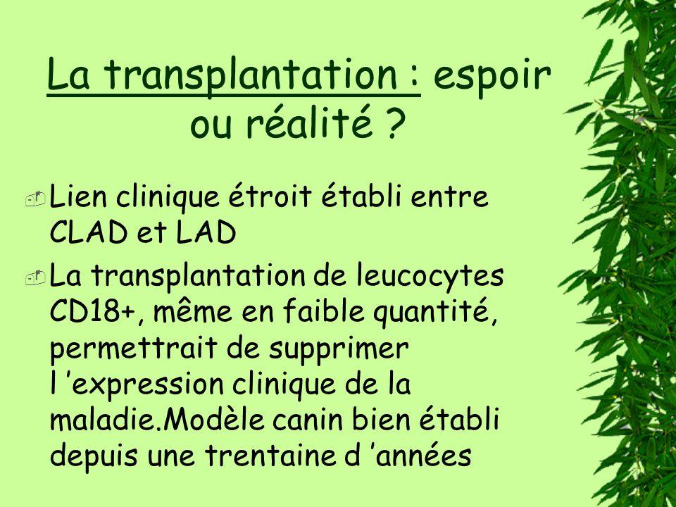 La transplantation : espoir ou réalité