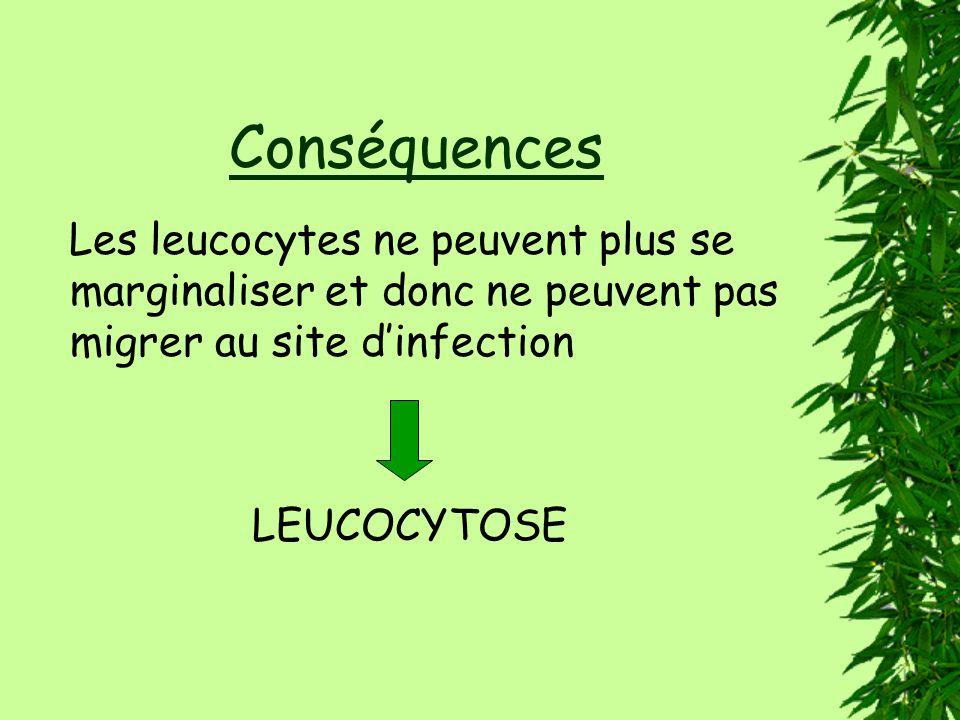 Conséquences Les leucocytes ne peuvent plus se marginaliser et donc ne peuvent pas migrer au site d'infection.