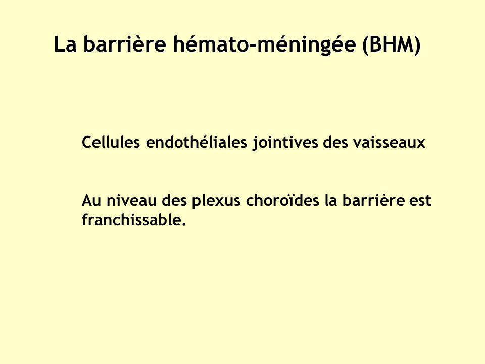 La barrière hémato-méningée (BHM)