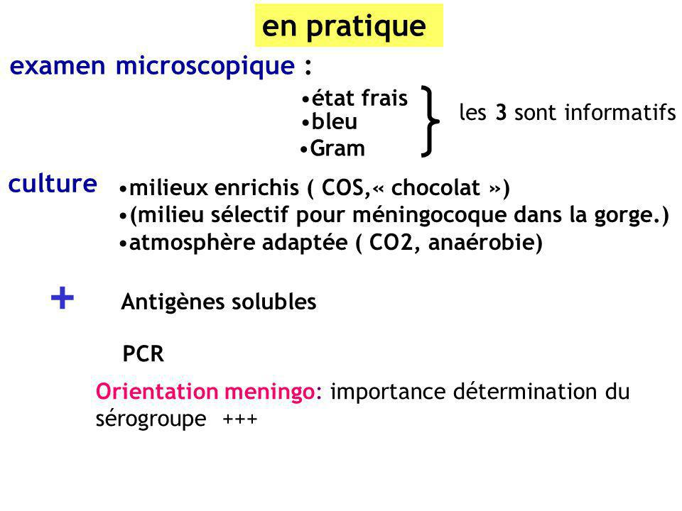 + en pratique examen microscopique : culture état frais