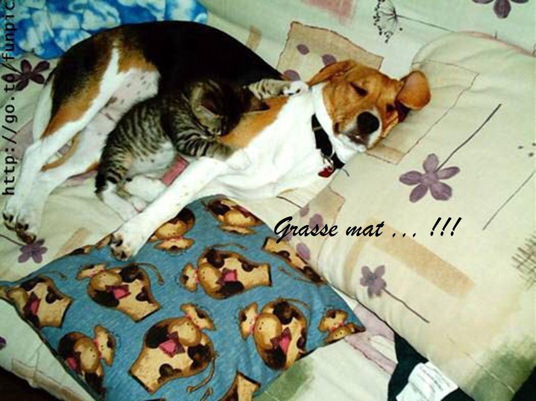 Grasse mat ,,, !!!