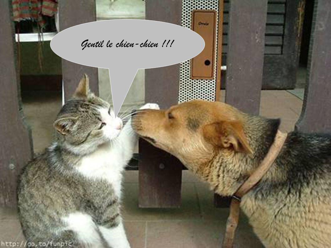 Gentil le chien-chien !!!
