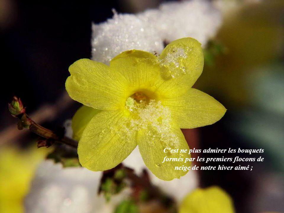 C'est ne plus admirer les bouquets formés par les premiers flocons de neige de notre hiver aimé ;
