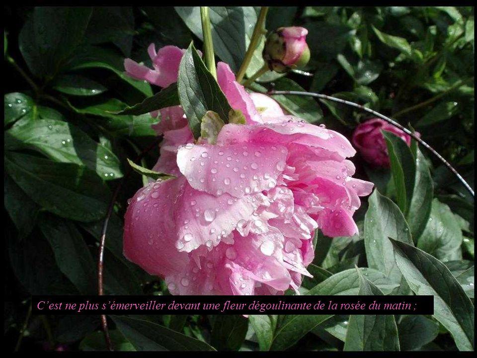 C'est ne plus s'émerveiller devant une fleur dégoulinante de la rosée du matin ;