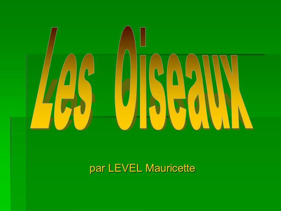 Les Oiseaux par LEVEL Mauricette