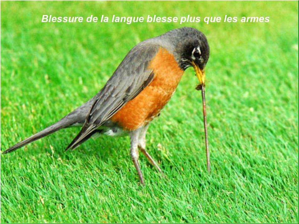 Blessure de la langue blesse plus que les armes