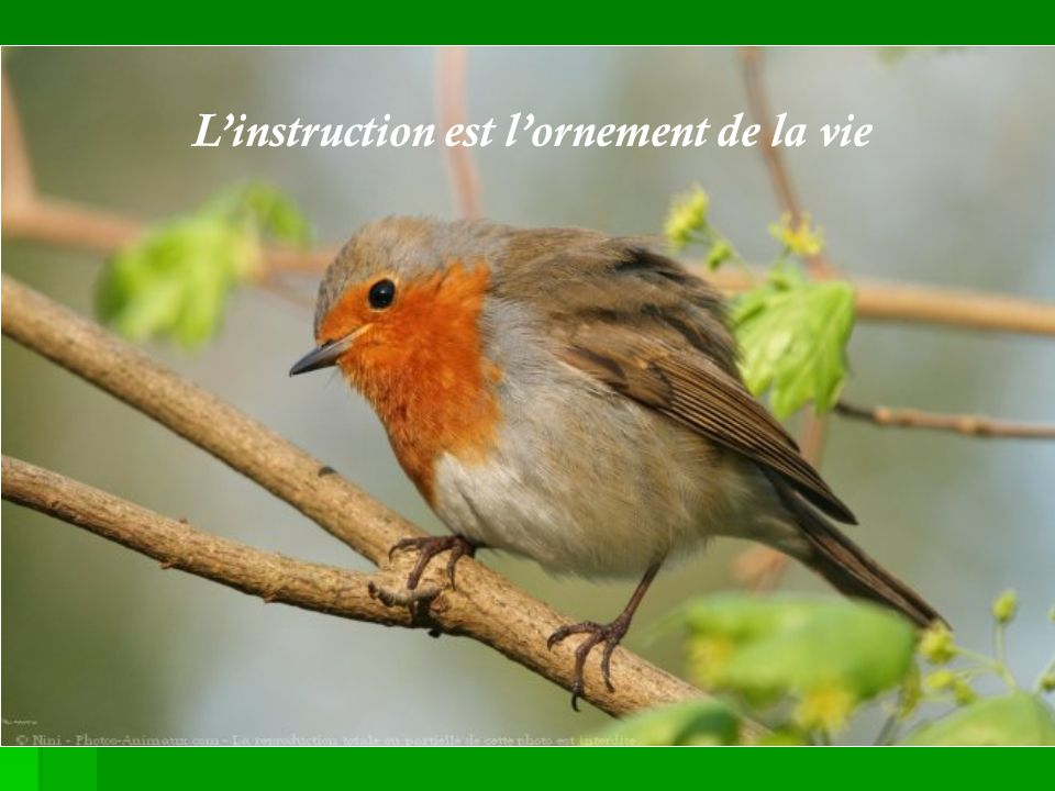 L'instruction est l'ornement de la vie