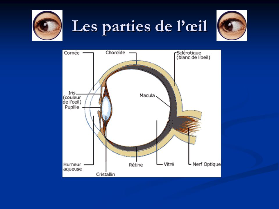 Les parties de l'œil Bbhj