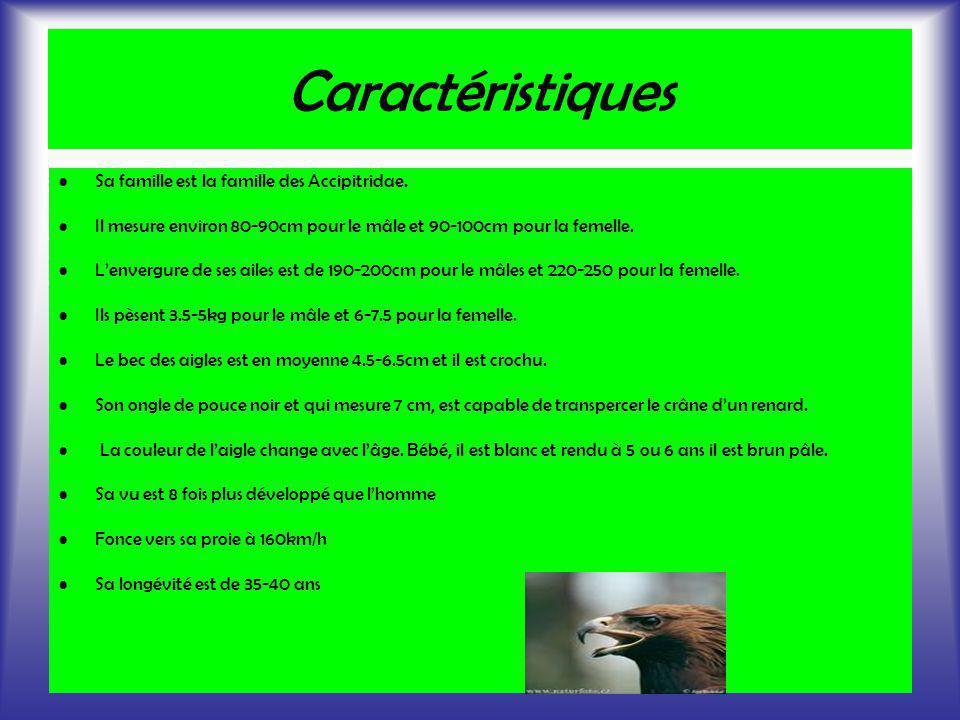 Caractéristiques Sa famille est la famille des Accipitridae.