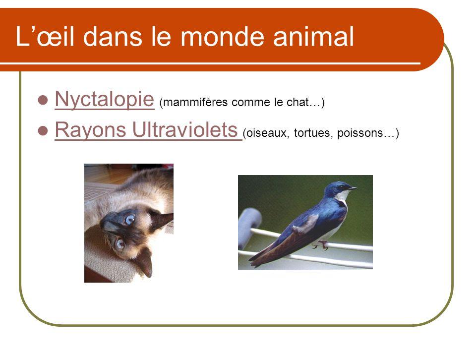 L'œil dans le monde animal