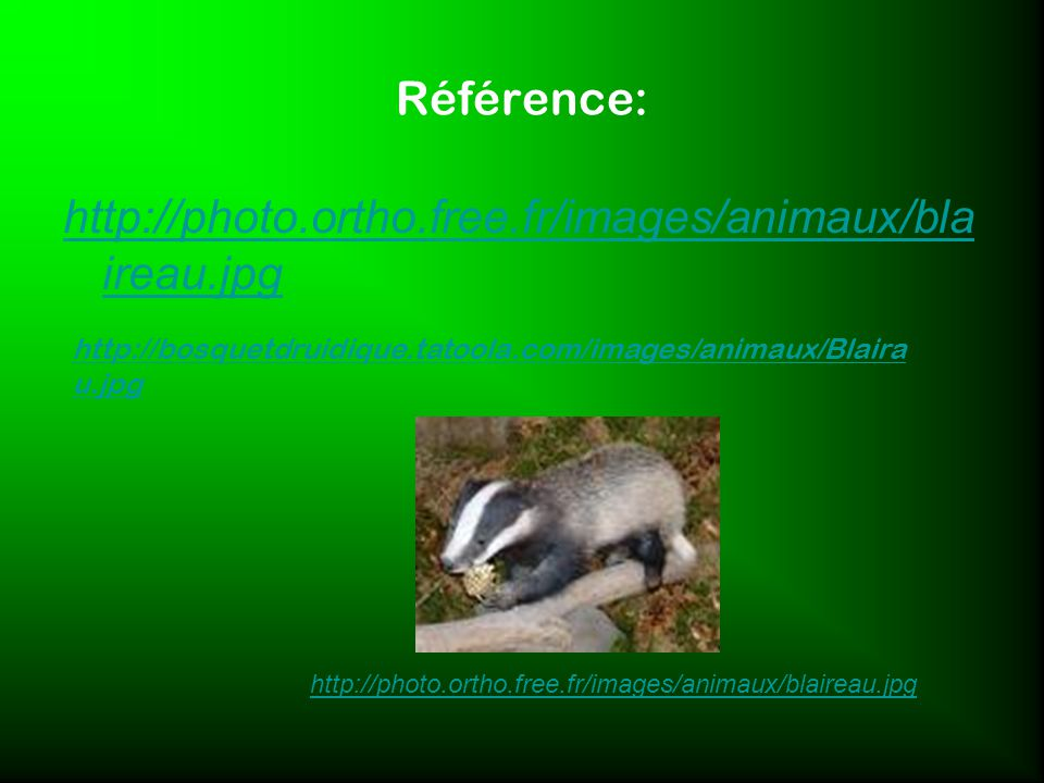Référence: http://photo.ortho.free.fr/images/animaux/blaireau.jpg