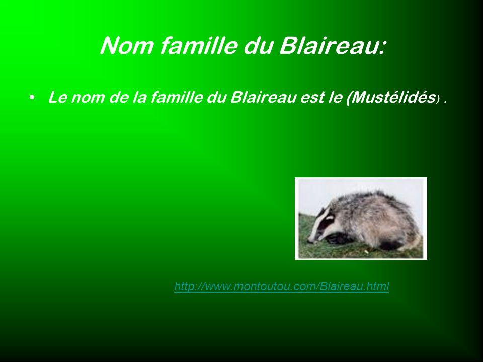 Nom famille du Blaireau: