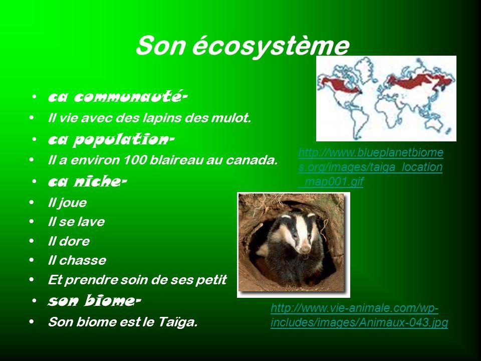 Son écosystème ca communauté- ca population- ca niche- son biome-