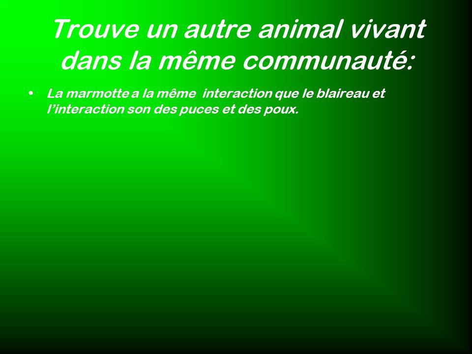 Trouve un autre animal vivant dans la même communauté: